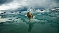 mj-390_294_adventures-in-the-extreme-north-stunning-photos-from-sebastian-copelands-arctica