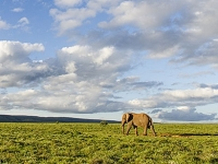 mj-390_294_diy-south-african-safaris-for-under-75-a-day