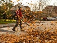 mj-390_294_everything-you-need-to-take-care-of-leaves