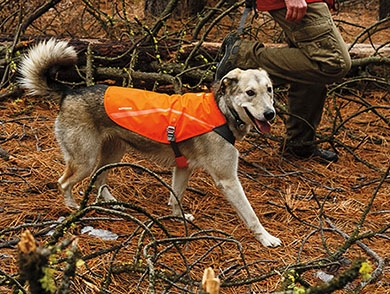 mj-390_294_gear-for-hiking-with-your-dog