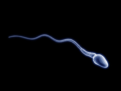 mj-390_294_how-obesity-is-passed-on-through-the-sperm