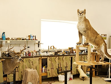 mj-390_294_how-to-buy-an-animal-trophy