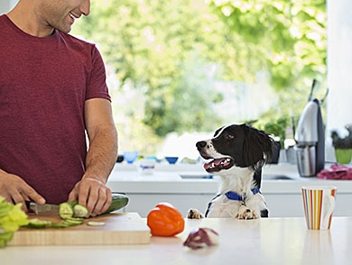 mj-390_294_how-to-cook-for-your-dog
