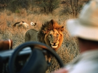 mj-390_294_how-to-go-on-safari