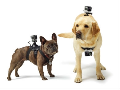 mj-390_294_how-to-make-a-gopro-video-with-your-dog