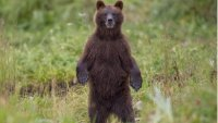 mj-390_294_how-to-prevent-a-bear-attack