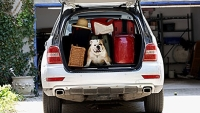mj-390_294_how-to-travel-with-your-dog