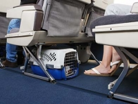 mj-390_294_jet-setting-with-pets