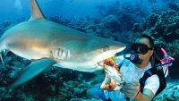 mj-390_294_no-cage-shark-diving