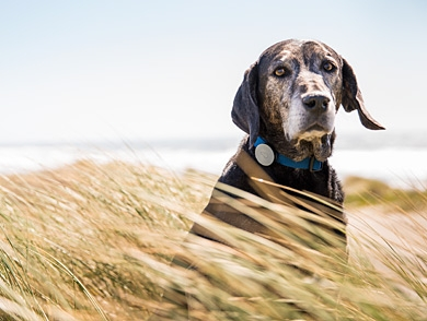 mj-390_294_the-activity-tracker-for-dogs