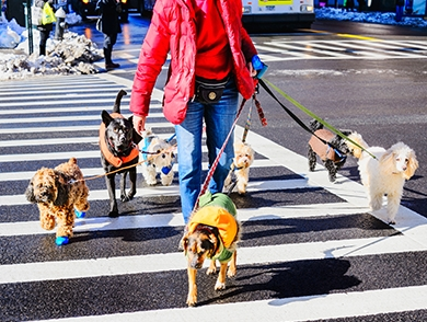 mj-390_294_the-best-cities-for-dogs