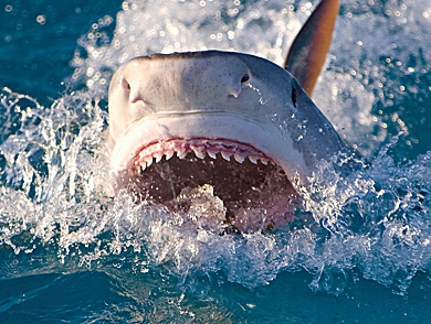 mj-390_294_the-end-of-shark-attacks