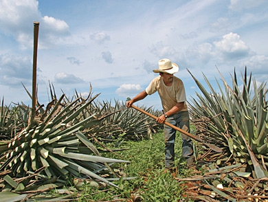 mj-390_294_the-hunt-for-sublime-tequila