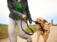 mj-390_294_the-ideal-exercise-for-your-dog