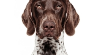 mj-390_294_the-right-dog-for-you