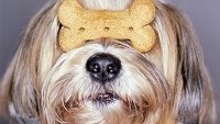 mj-390_294_tips-about-dog-treats