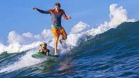 mj-390_294_train-your-dog-to-surf