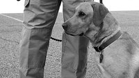 mj-390_294_what-police-dogs-can-teach-us-about-pet-training