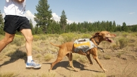 mj-618_348_a-workout-fit-for-the-dogs