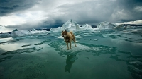 mj-618_348_adventures-in-the-extreme-north-stunning-photos-from-sebastian-copelands-arctica