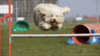 mj-618_348_agility-training-workouts-you-can-do-with-your-dog