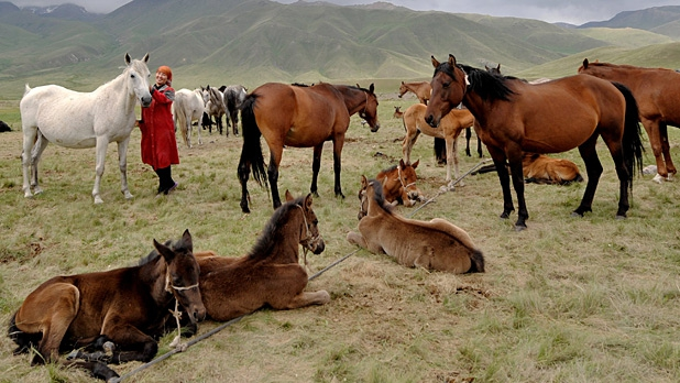 A Kyrgyz woman stands in the middle of a herd of horses on the Suu-Samyr plateau on the ancient Great Silk Road from Bishkek to Osh.