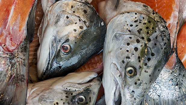 Ask a chef how to cook and eat fish heads men 39 s journal for Restaurants that serve fish near me