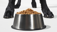 mj-618_348_ask-questions-what-you-should-know-about-dog-food