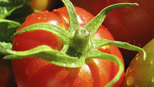 mj-618_348_baked-36-ways-to-eat-a-tomato