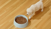 mj-618_348_beware-of-marketing-what-you-should-know-about-dog-food
