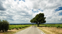 mj-618_348_bike-tour-in-provence-with-trek-travel-experiences-gift-guide