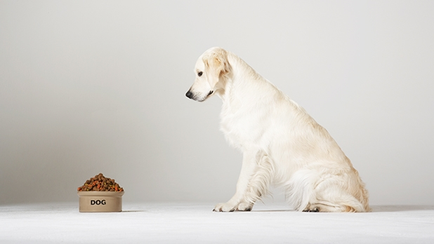 mj-618_348_by-products-and-meat-meal-what-you-should-know-about-dog-food