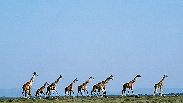 mj-618_348_consider-experience-over-luxury-how-to-take-a-safari