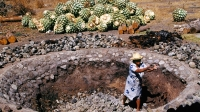 mj-618_348_deep-in-the-heart-of-mezcal-country