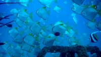 mj-618_348_diving-the-bay-of-bengals-newest-reef