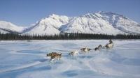 mj-618_348_drive-a-dogsled-team-in-the-yukon-territory-the-most-extreme-winter-getaways-in-north-america