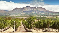 mj-618_348_exploring-south-africas-wine-valley