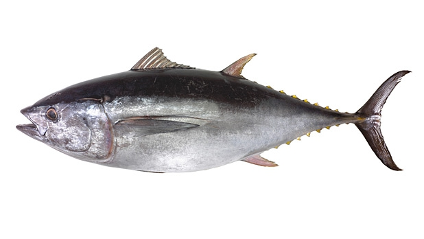 mj-618_348_fish-buyers-guide