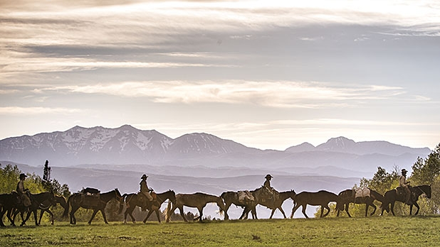 essays wild mustangs In the west, if you listen closely you just might hear the magnificent sound of wild mustang's hoof beats in the distance mustangs have very unique ch saving the heartbeat of the west   teen ink.