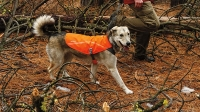 mj-618_348_gear-for-hiking-with-your-dog