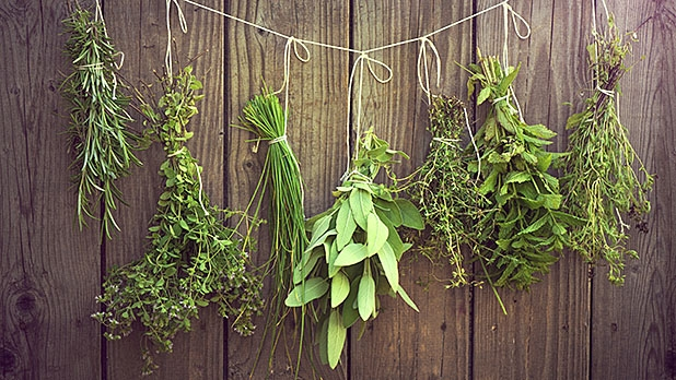 mj-618_348_herbs-for-your-garden-and-your-grill