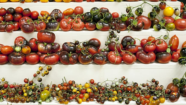 mj-618_348_homemade-bbq-sauce-36-ways-to-eat-a-tomato