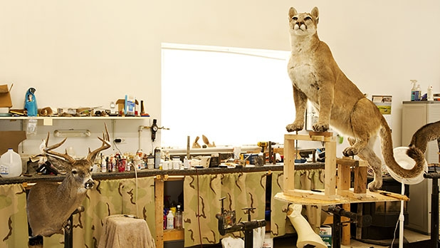 How to Buy Taxidermy - Men's Journal
