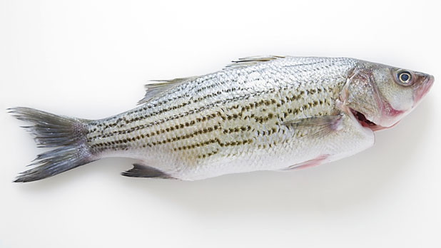 mj-618_348_how-to-buy-and-cook-fish-right-cimarustis-favorite-wild-fish-for-home-cooks