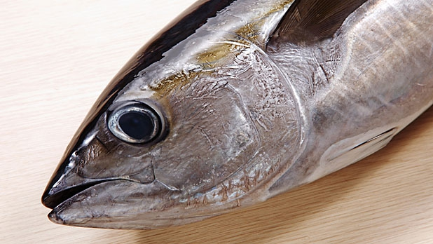 mj-618_348_how-to-buy-and-cook-fish-right-question-1-at-the-fishmonger-is-it-sustainable
