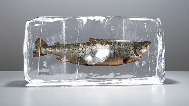 mj-618_348_how-to-buy-and-cook-fish-right-to-freeze-or-not-to-freeze-and-how-to-kill