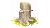 mj-618_348_how-to-chainsaw-a-tree