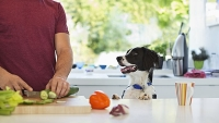 mj-618_348_how-to-cook-for-your-dog