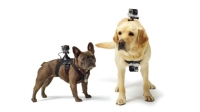 The GoPro Fetch mount let's you add point-of-view footage to your dog video.