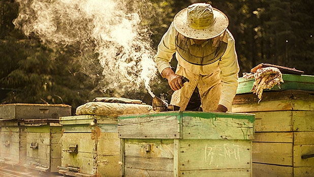 how to start a beehive